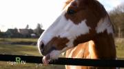 Impressionen Pferdeliebe