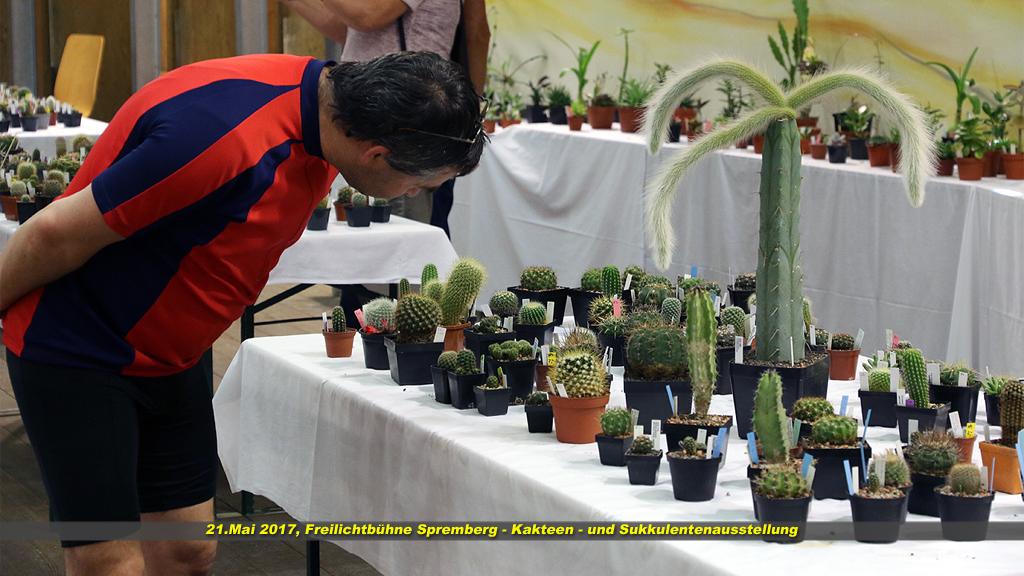 Kaktus 09