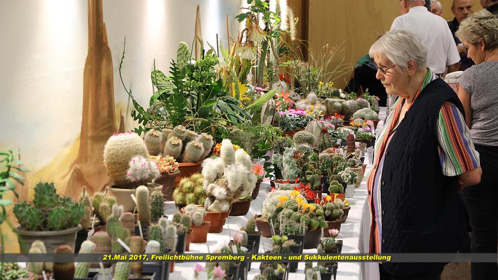 Kaktus 08