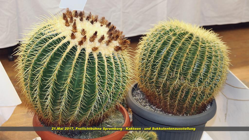 Kaktus 04