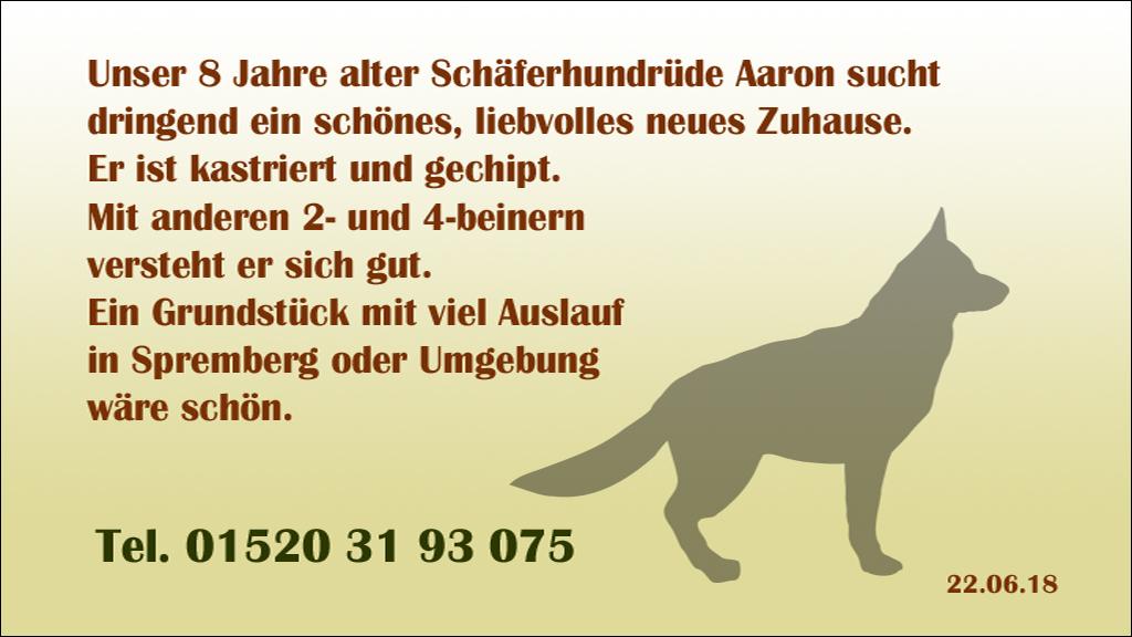 Hund-Aaron