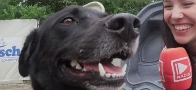 Hundebeachparty bei Zoo & Co.-Image