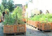 http://www.hamburg1.de/aktuell/Lust_auf_Gartenarbeit-21865.html