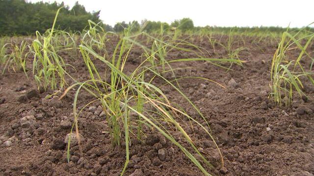 Biomasse-Wunder am Tagebau-Rand