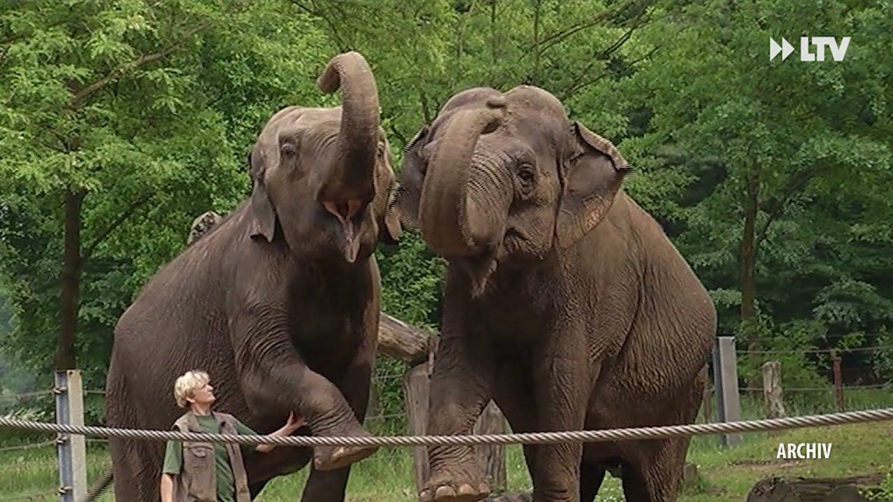 Cottbus bekommt neuen Elefantenzuwachs - die Kurznachrichten aus Cottbus vom 13.10.21